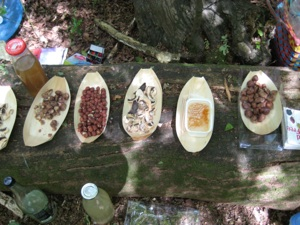 forest fruit laid out in Highgate Woods