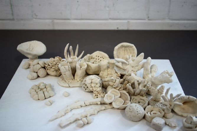 Models of coral